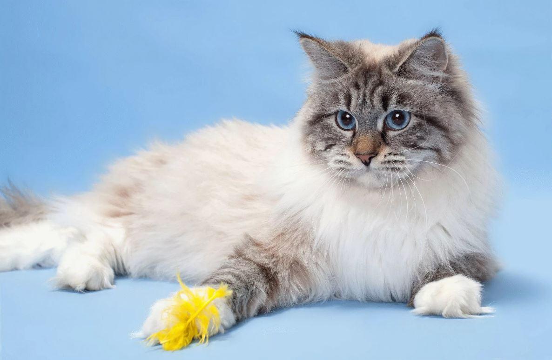 фото маскарадной кошки