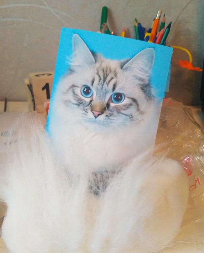 Маскарадная кошка фото