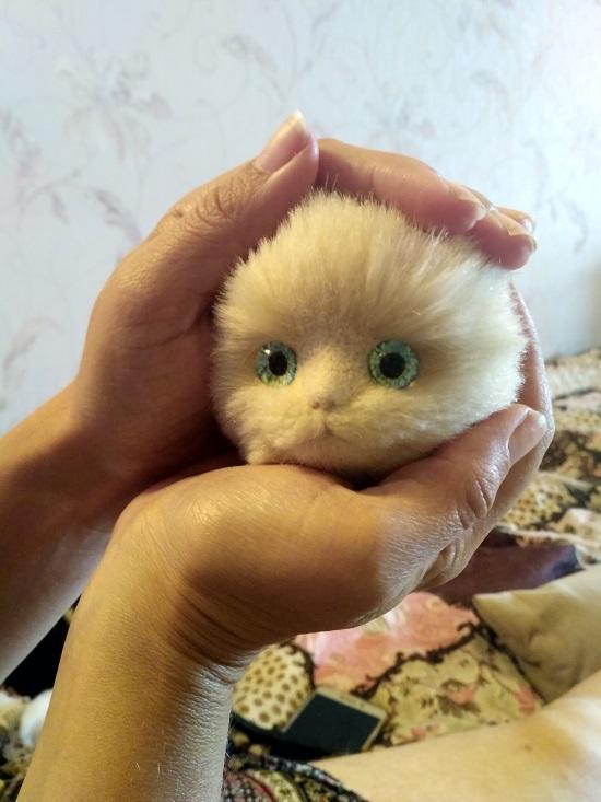 котёнок с глазками