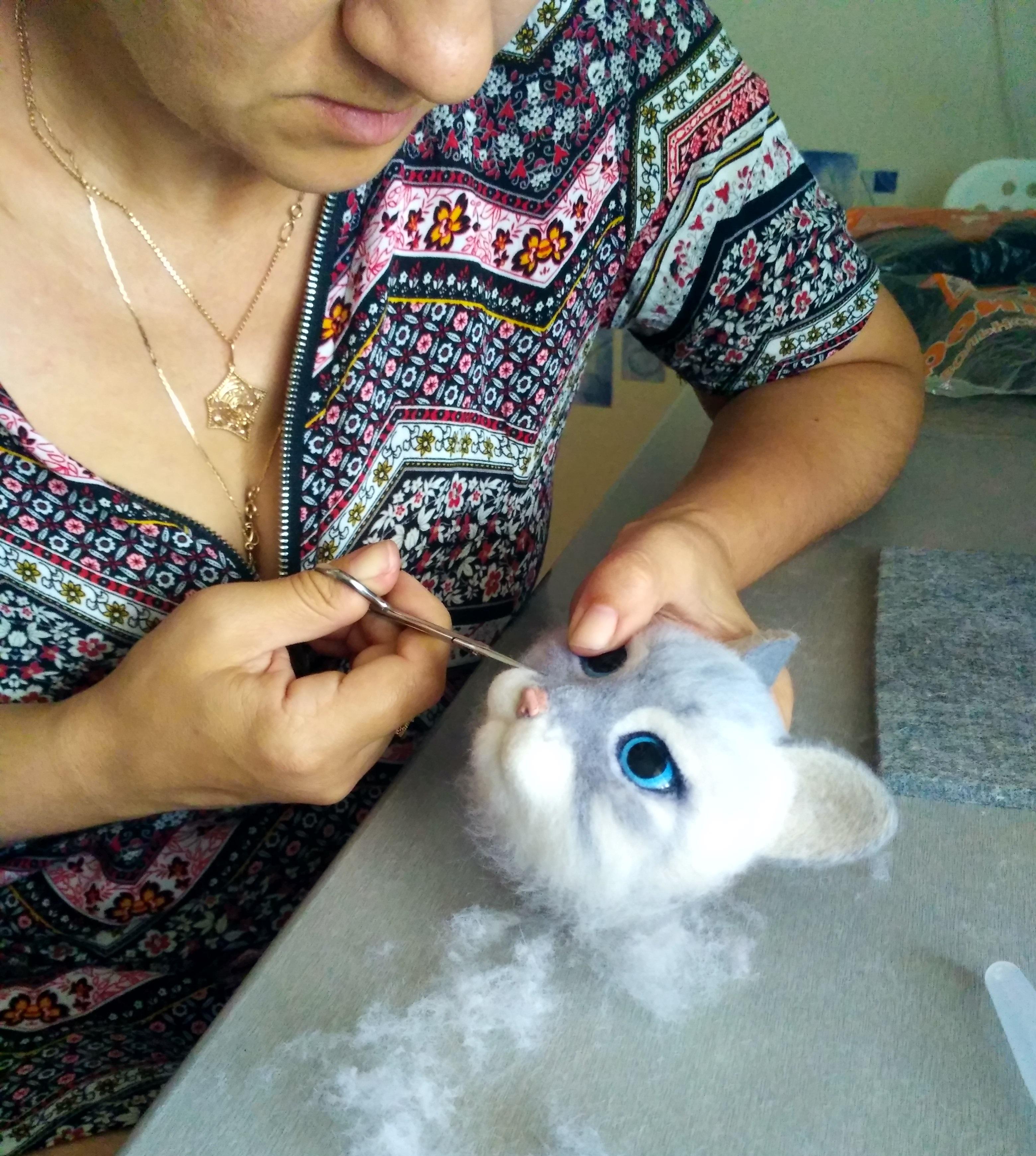 стрижка шерсти у кошки