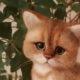 Авторская работа из шерсти реальный котёнок с перышком
