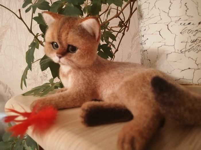 реальный котенок